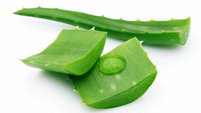 aloe vera gel seeping from cut aloe pieces