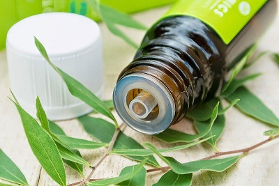 tea tree oil bottle with tea tree leaves